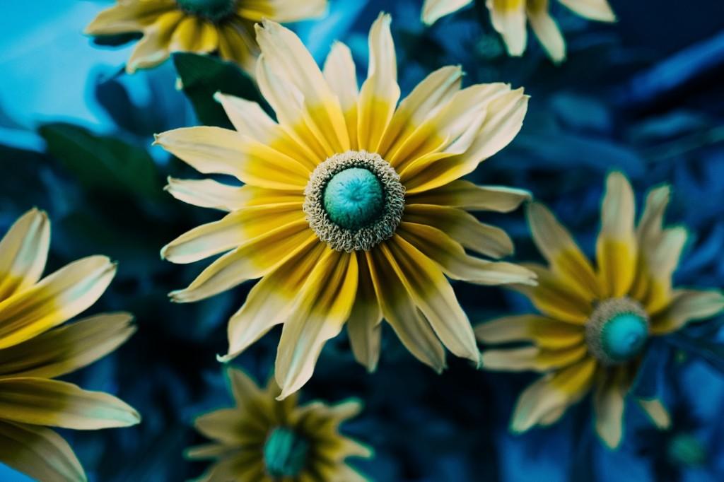 bloom-1060
